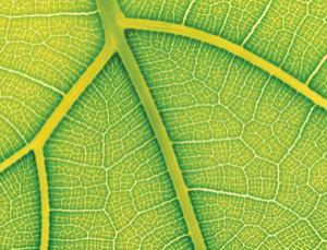 titanium leaf